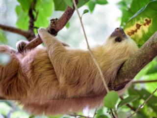 生き物の魅力を伝えるものづくりのため、コスタリカへ行きたい!