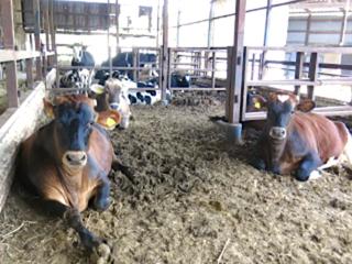 国分牧場とお客様をつなぐ!直売×カフェ×農業体験の複合施設を
