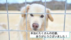 犬猫の保護活動に夢をもちたい。離島ならではの苦しみからの挑戦
