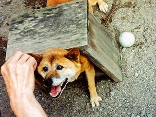 関西の施設で保護された捨て犬捨て猫をハープの音色で癒したい!