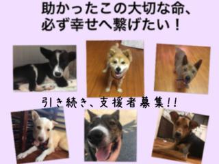 行き場を無くした保護犬達を幸せへと繋げたい!