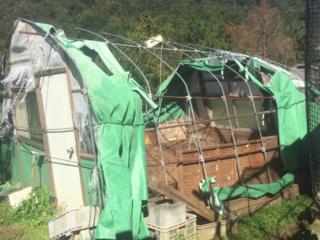 熊野地鶏の飼育開始!大型台風で初年度から大ピンチ!!