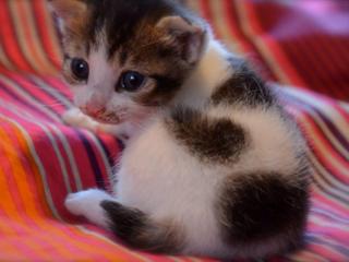 アモリコ×ネコリパ~殺処分待ちの猫達へXmasプレゼントを!