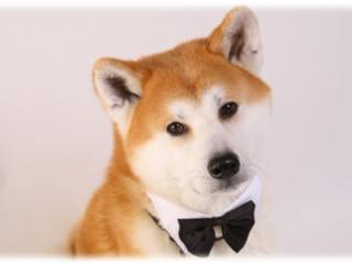 秋田犬が看板犬!ペットを同伴できるレストランを再開したい!