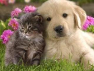 東京MXで動物愛護の番組を作ろう