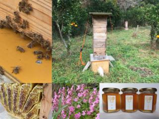 野生のニホンミツバチと我々人間が共存できる地域環境を作る