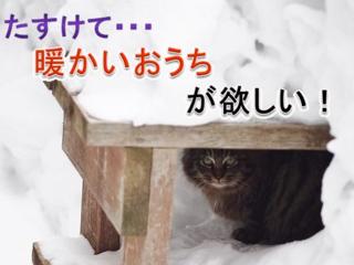 ペレットが北国の猫を救う!ペレットストーブ&猫砂普及大作戦!