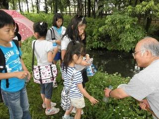 新田湧水群の保全を行いホタルの生息地を再生したい