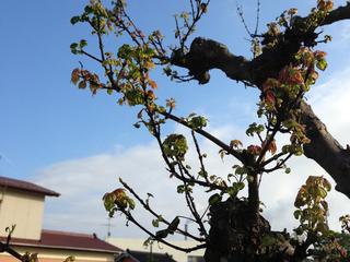 津波で庭を流された被災者の新居に思い出の木を贈りたい!