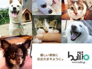 犬猫の殺処分数を減らす為、便利な機能を追加し情報発信します!