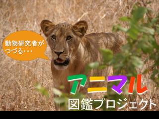 リアルな動物の姿を!現役の動物研究者が綴るアフリカ動物図鑑