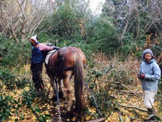 はたらく馬と共に「懐かしい未来」へ!里山&茶畑再生PJ