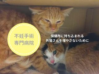 不幸な命を増やさない!和歌山県に猫の不妊手術専門病院を