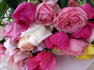 これまでなかった新品種の薔薇を開発し、日常を素敵に彩りたい!