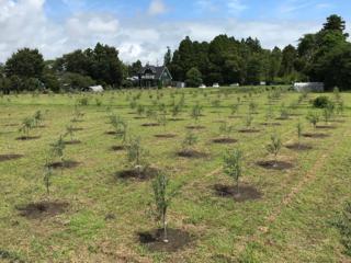 房総の耕作放棄地を再生し、新たなオリーブの産地にしたい!