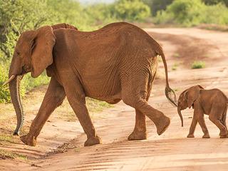 ケニアの大自然を紹介する写真展を開催し、ゾウの森を守りたい!