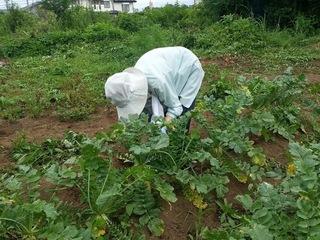 障がいを持った高齢者が収穫した野菜を漬物にして販売したい!