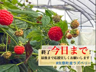 【福島県矢祭町】10年越しの実現へ国産ラズベリーの生産拠点を!