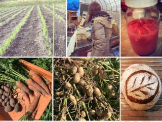 素材から手作り。無農薬自然栽培の農家がパンを焼くパン工房を!