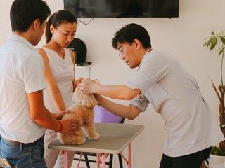 毎年800人が亡くなる狂犬病を根絶!カンボジアで動物病院を開設