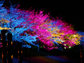福岡 行橋の春の風物詩!桜スマイルフェスタ2019を市民の力で!