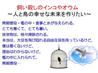 飼い殺しのインコやオウム 〜人と鳥の幸せな未来を作りたい〜