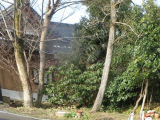グループホームの敷地内の欅・銀杏などの樹木を伐採し整地する。