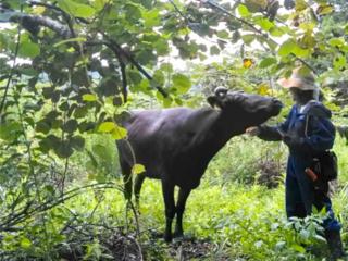 震災を生き延びた牛達と共に。持続可能なエコ草刈りで地域を守る