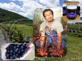 日本初!厳冬期にブルーベリーを育て出荷することに挑戦したい!