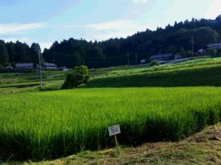 中山間地の農業を守りたい!~高校生が耕作者不在の水田に挑む~