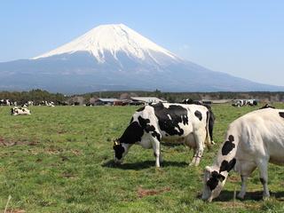 世界文化遺産の富士山・朝霧高原の景観を守る住民活動を支援!