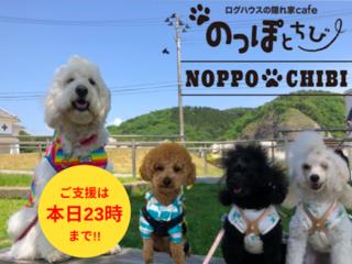 犬も飼い主も癒される空間を!多賀城市にドッグカフェを開店!
