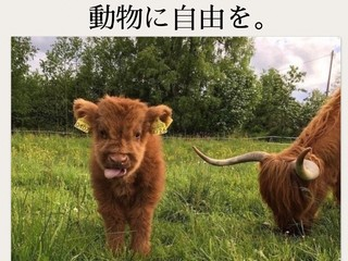動物の犠牲に溢れた美意識を変えたい!