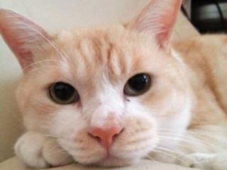 保護猫たちの命を繋ぐ!「佐倉ニャンだふる」のサポーター募集