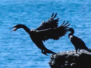 レンズに映そう!三浦の海 海洋教育写真コンテスト開催