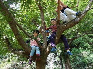 早川町に、子どもが自由に遊べるツリーハウスを作りたい!