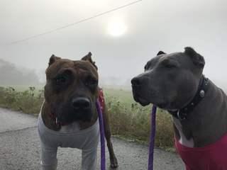 愛犬が教えてくれた本当のイヌのシアワセを伝えたい!