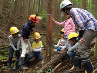 「健康な森ってどんな森?」を学ぶきこり体験を子どもたちに!
