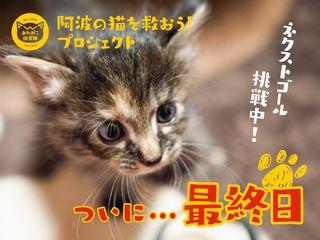 阿波の猫たちを救う。過酷な環境下の猫を減らすための第一歩!