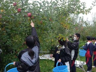 北部高校生が地域活性に挑戦、飯綱町のりんご農家をお手伝い!
