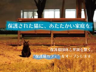 保護された猫と里親を繋ぐ。豊川初の保護猫カフェをオープン!