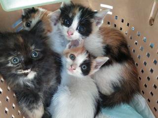 保護犬・保護猫と新しい家族を繋ぐ『保護っこ手帳』を作りたい!