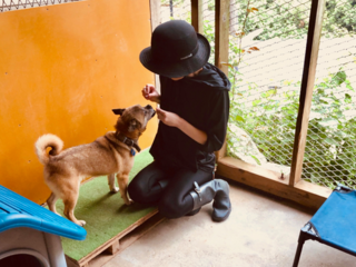 犬舎建設 Part2: プレハブ暮らしの犬達を光ある犬舎へ!