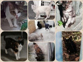 捨て猫・野良猫達に避妊・去勢をし、里親探しをしていきたい
