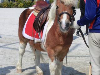 ハンディをもつお子さんが馬との活動を通じ成長できる場所を提供