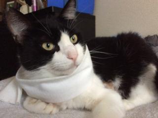 負傷した保護猫、天ちゃんを治療して、新しい家族を見つけたい!