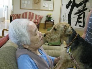 保健所にいる犬をセラピードッグとして育成し、活躍させたい
