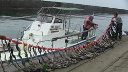 シートベルトで藻場を増殖 !リサイクルしながら海の命を守る。