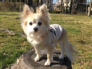 遠赤外線ドッグウェアで日本全国のシニア犬を元気にしたい!
