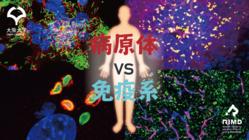 信頼できる情報で正しい知識を!感染症・免疫のWEB虎の巻制作